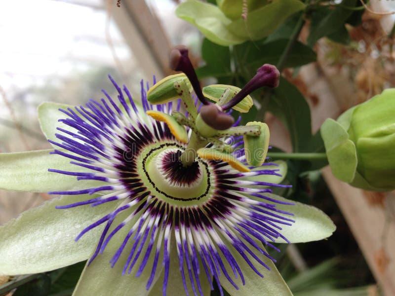 Exotische Blume lizenzfreie stockbilder