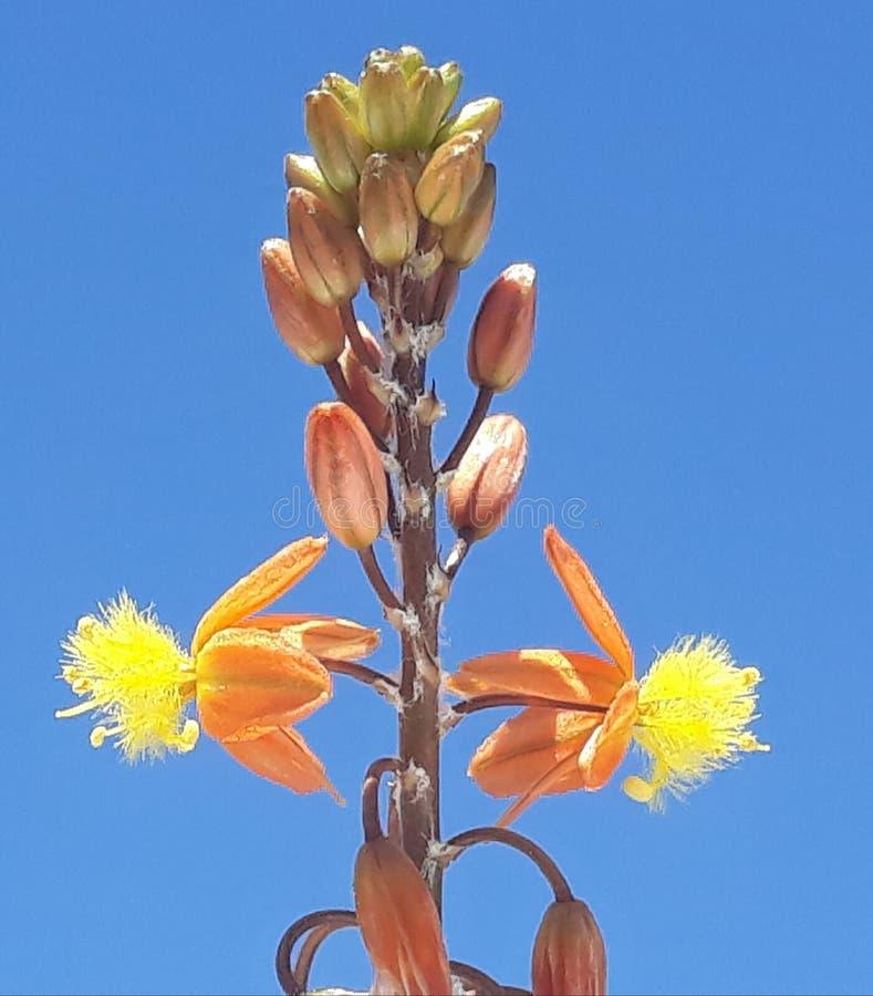 exotische Blume stockbild