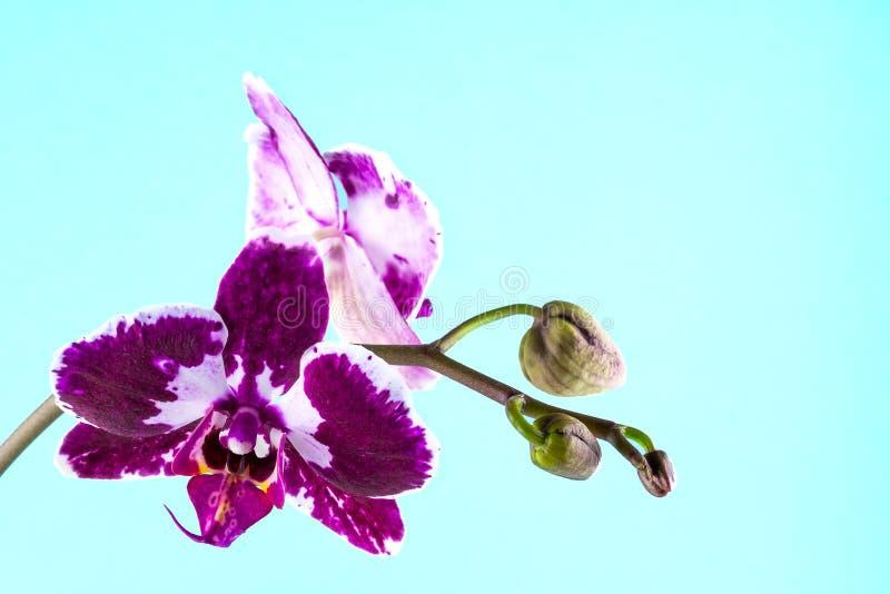 Exotische Blume auf einem blauen Hintergrund Platz für Text stockfotos