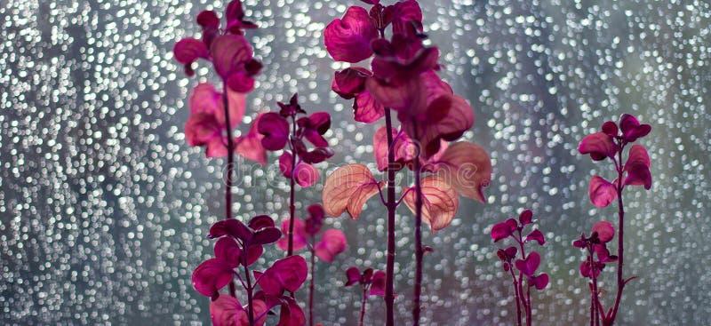 Exotische Blumen stockfoto