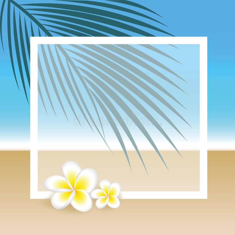 Exotische Blumen des Frangipani auf schönem Palm- Beachsommerhintergrund mit Kopienraum vektor abbildung