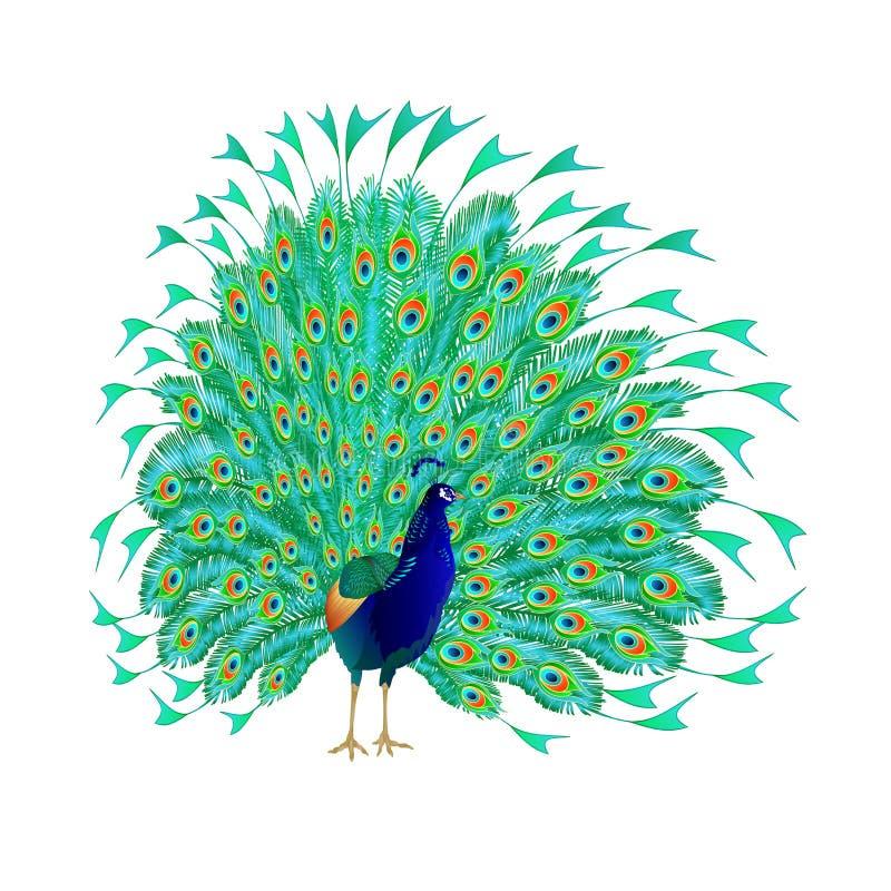 Exotische de vogels natuurlijke en tropische bloemen van de pauwenschoonheid watercoloron een witte uitstekende vector editable i vector illustratie