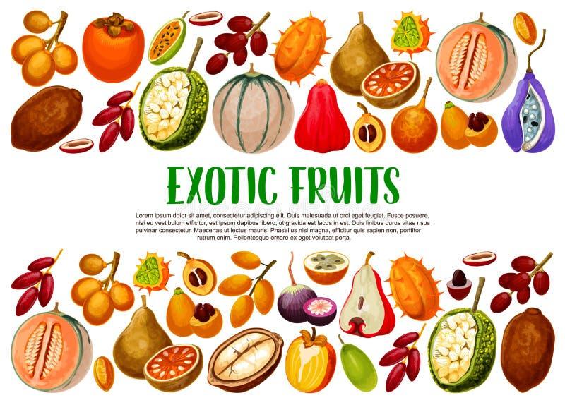 Exotische Fr?chte und Beeren Tropisches Lebensmittel vektor abbildung