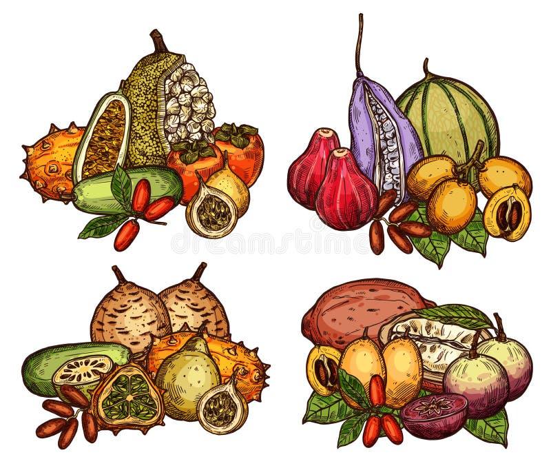 Exotische Frucht und Beere der tropischen Baumskizze lizenzfreie abbildung