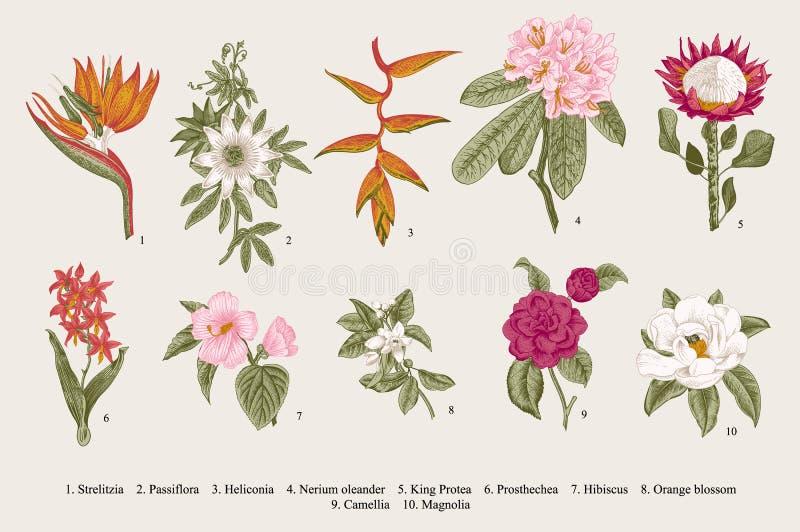 Exotische geplaatste bloemen Botanische vector uitstekende illustratie royalty-vrije illustratie
