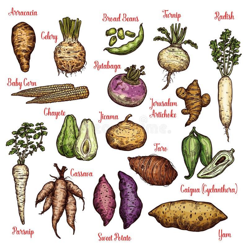 Exotische groenten, bonen en knollenschetsen royalty-vrije illustratie