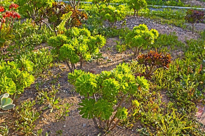 Exotische houselekplanten in Zuid-Afrika royalty-vrije stock afbeeldingen