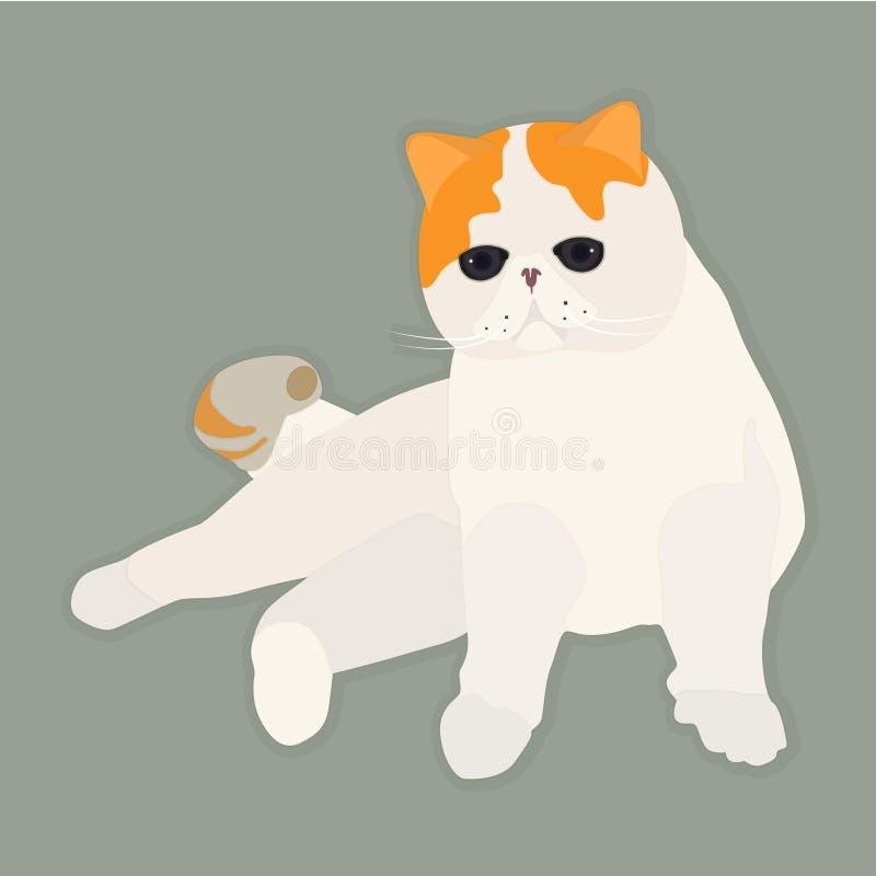 Exotische Katze lizenzfreie stockfotos