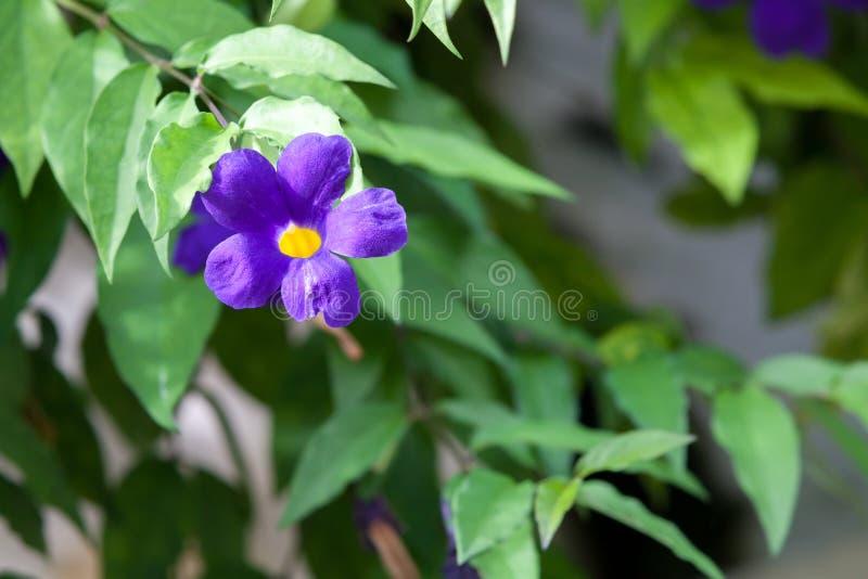 Exotische kleurrijke bloemen op de struik met heel wat groene bladeren royalty-vrije stock fotografie