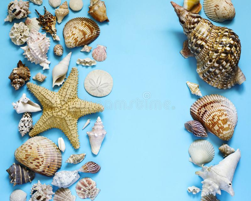 Exotische Muscheln und Starfishsammlungsebene legen auf einen blauen Hintergrund lizenzfreie stockfotos