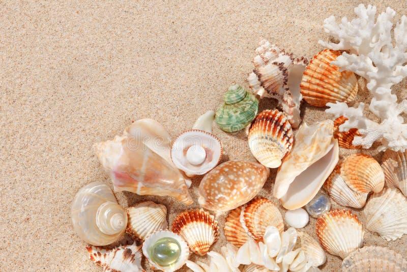 Exotische Oberteile und Korallen im Sand Sommerstrand-Ferienkonzept stockbild
