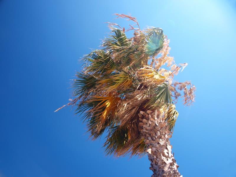 Exotische palm op een winderige dag