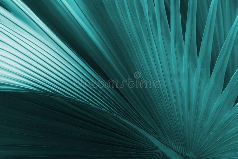 Exotische Palmblätter in blauer Tone Color als natürlichem Beschaffenheits-Hintergrund lizenzfreies stockbild