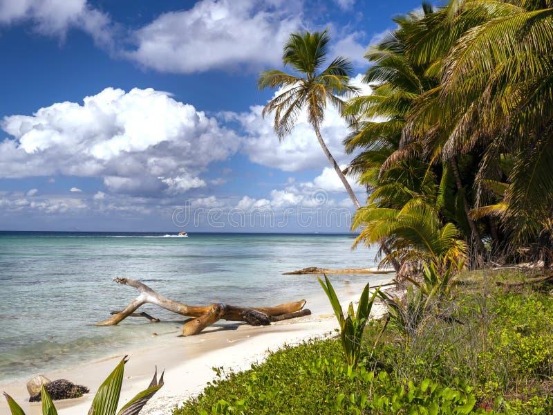 Exotische palmen op een Caraïbisch strand die wit zand en diepe blauwe hemel met azuurblauw overzees en afwijkingshout tonen royalty-vrije stock afbeeldingen