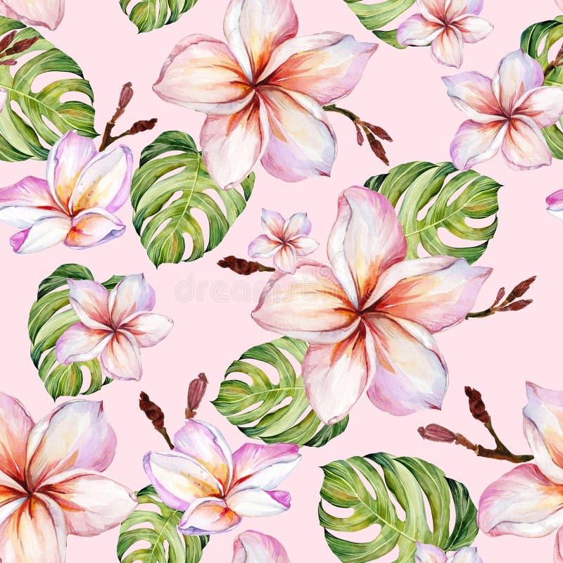 Exotische plumeria bloeit en groene monsterabladeren op roze achtergrond in naadloos tropisch patroon Het Schilderen van de water royalty-vrije illustratie