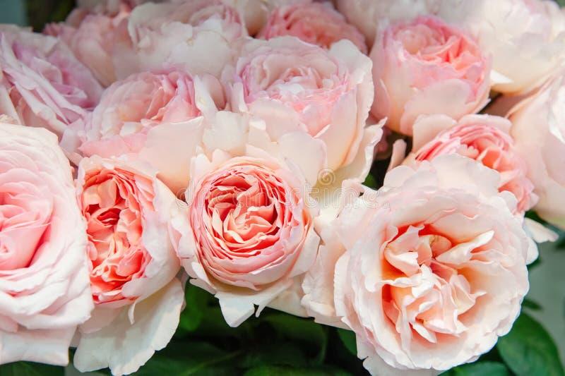 Exotische Rosen der rosa modernen Auslesevielzahl im Blumenstrauß als Geschenk Hintergrund Selektiver Fokus lizenzfreies stockfoto