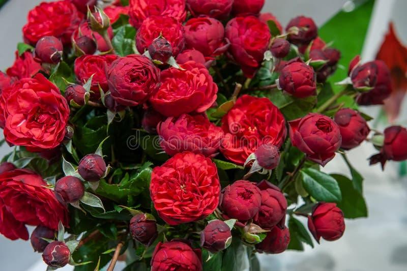 Exotische Rosen von der modernen Vielzahl der Scharlachrotauslese im Blumenstrauß als Geschenk Hintergrund Selektiver Fokus stockbild