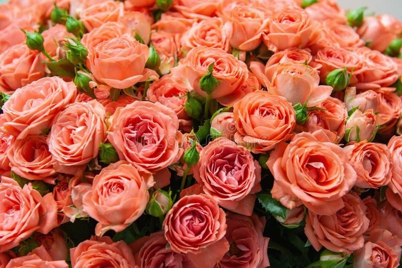 Exotische Rosen von der modernen Vielzahl der Scharlachrotauslese im Blumenstrauß als Geschenk Hintergrund Selektiver Fokus lizenzfreie stockfotos