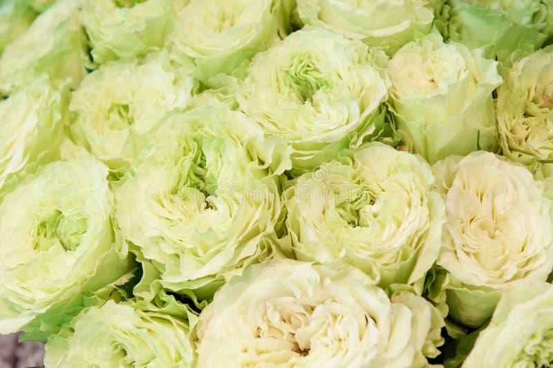 Exotische rozen van groen-roze elite moderne verscheidenheden in het boeket als gift Achtergrond stock fotografie