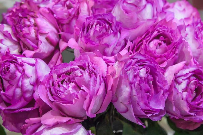 Exotische rozen van lilac elite moderne verscheidenheden in het boeket als gift Achtergrond Selectieve nadruk stock foto