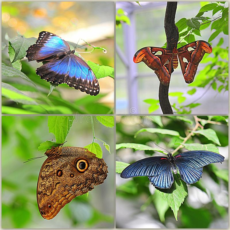 Exotische Schmetterlingscollage stockbilder