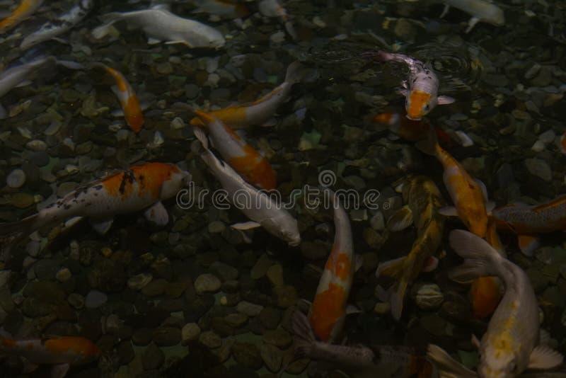 Exotische See- und Flussfische schwimmen im Aquarium n lizenzfreie stockbilder