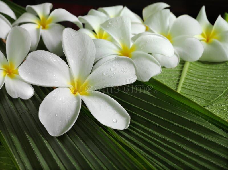 Exotische tropische bloemen royalty-vrije stock afbeeldingen