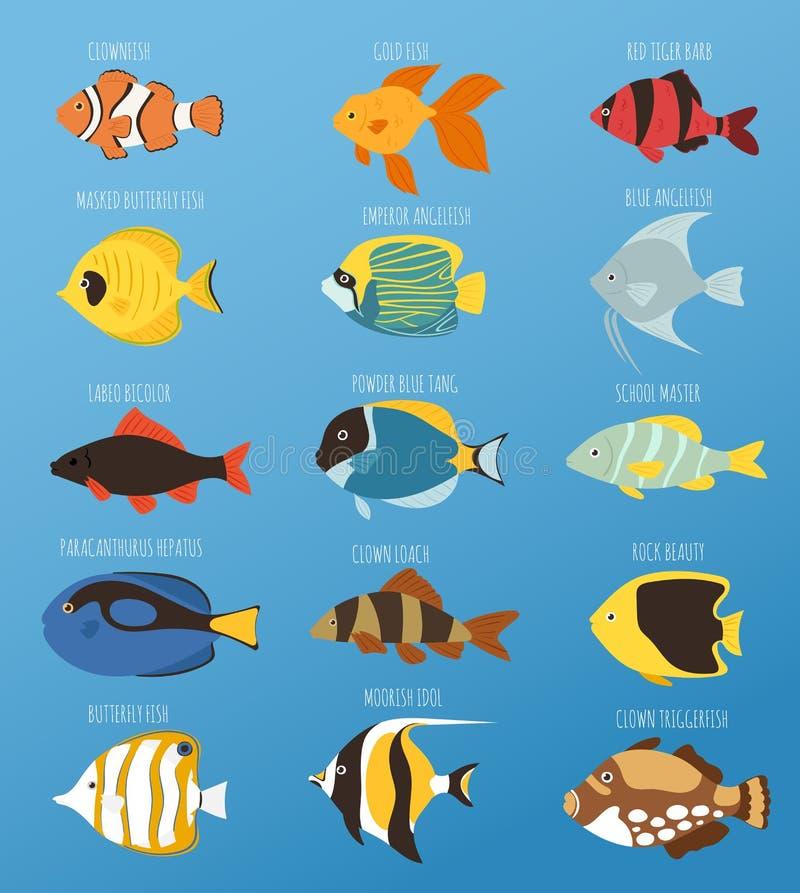 Exotische tropische Fische laufen flache Vektorillustration der unterschiedlichen Zuchtfarbunterwasserozeanspezieswasserbelastung lizenzfreie abbildung