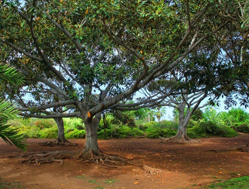 Exotische tropische tuin stock afbeelding