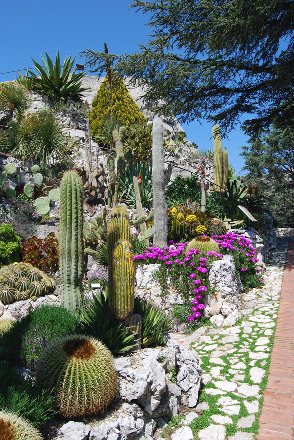 Exotische tuin stock fotografie