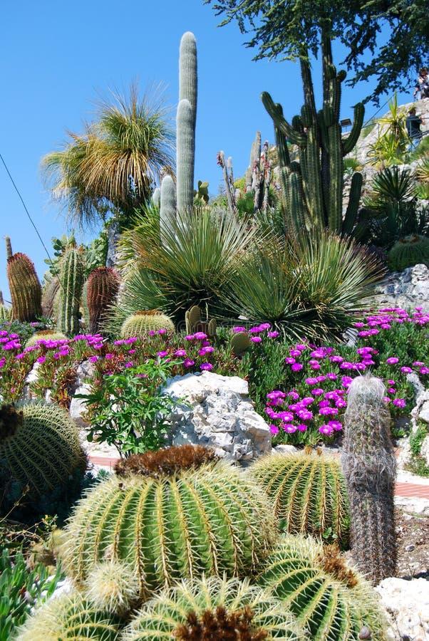 Exotische tuin royalty-vrije stock foto