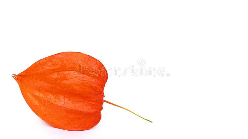 Exotische verse oranje die physalis op witte achtergrond wordt geïsoleerd exemplaarruimte, malplaatje stock afbeeldingen