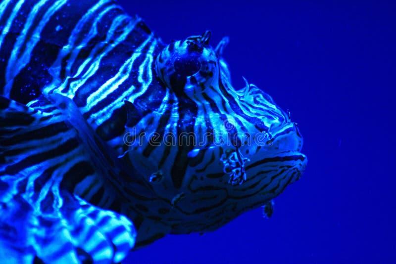 Download Exotische vissen stock foto. Afbeelding bestaande uit patroon - 10779778