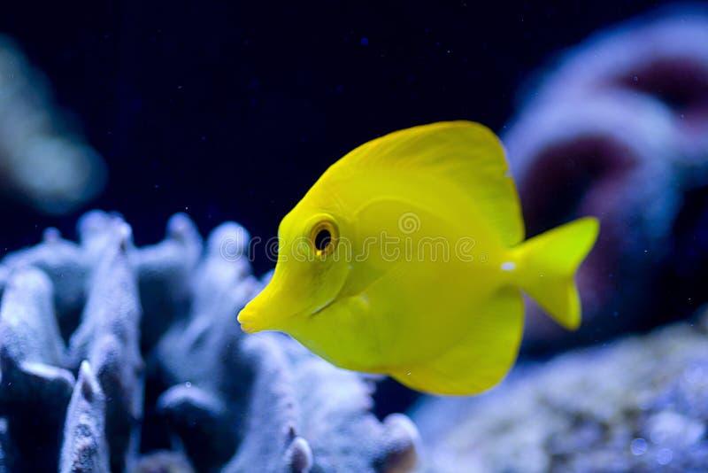 Exotische vissen royalty-vrije stock fotografie