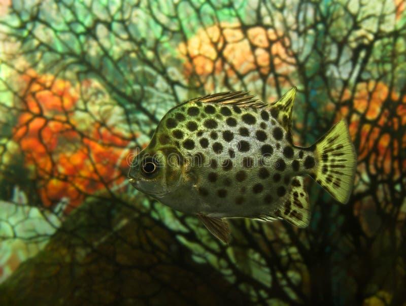 Exotische vissen stock foto
