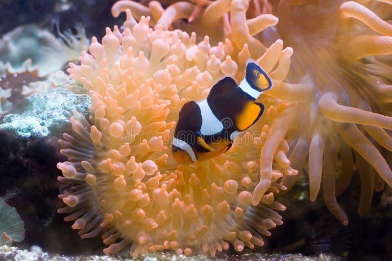 Exotische vissen 7 royalty-vrije stock fotografie