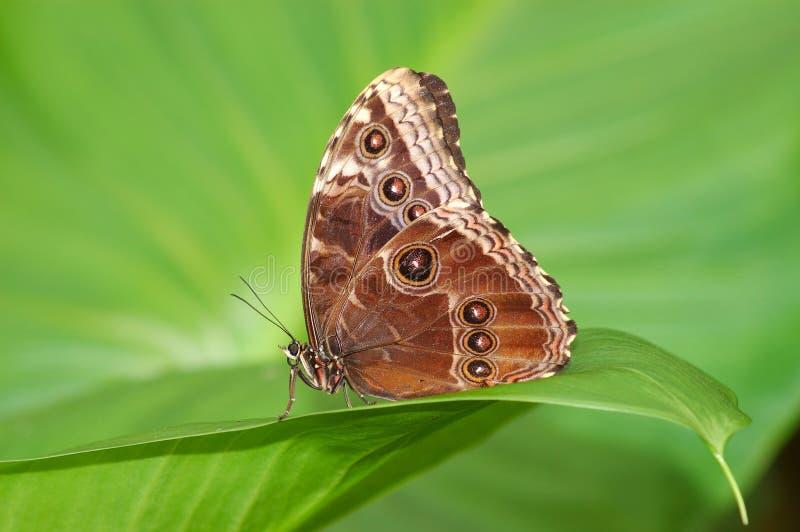 Exotische vlinder. stock foto