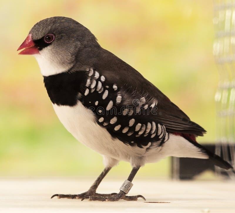 Exotische vogel stock afbeelding