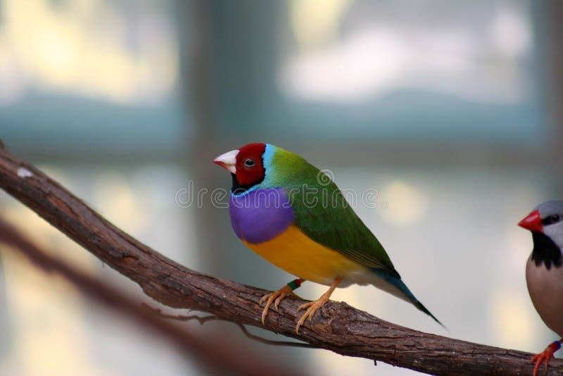 Exotische Vogel royalty-vrije stock foto