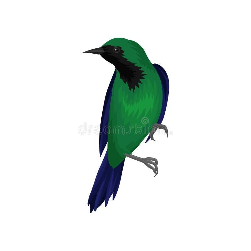 Exotische vogel met heldergroene en donkerblauwe veren Het wild en faunathema Gedetailleerd vectorelement voor ornithologie royalty-vrije illustratie