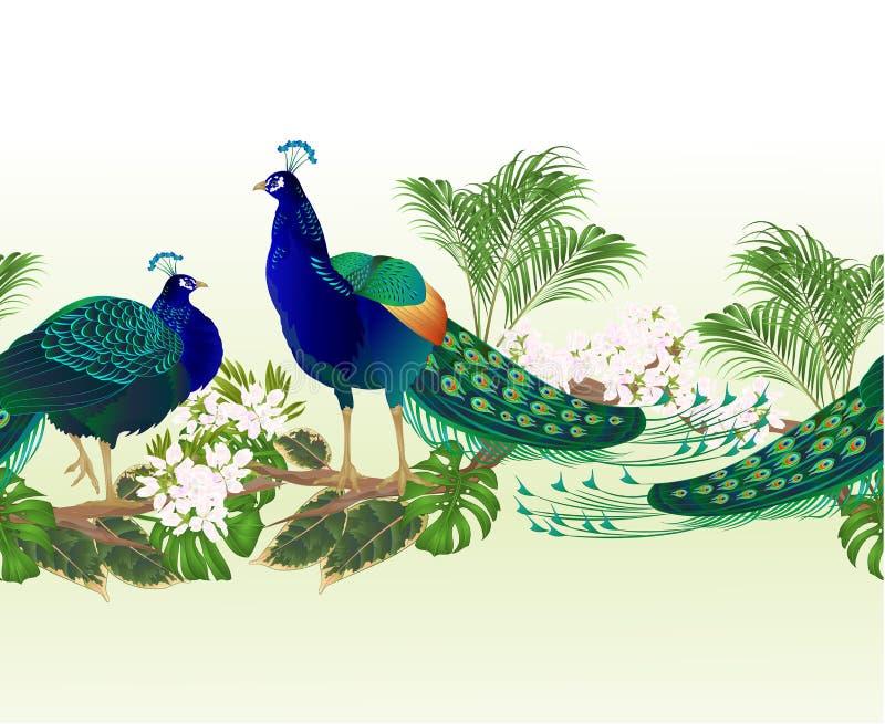Exotische vogels grens de naadloze van de achtergrondpauwenschoonheid en de tropische uitstekende editable vectorillustratie van  vector illustratie
