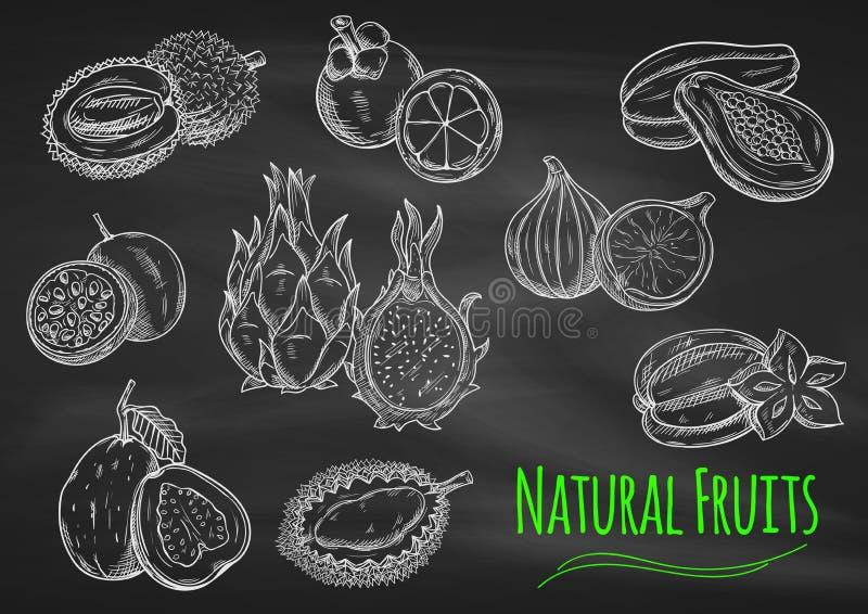 Exotische vruchten krijtschetsen op bord royalty-vrije illustratie