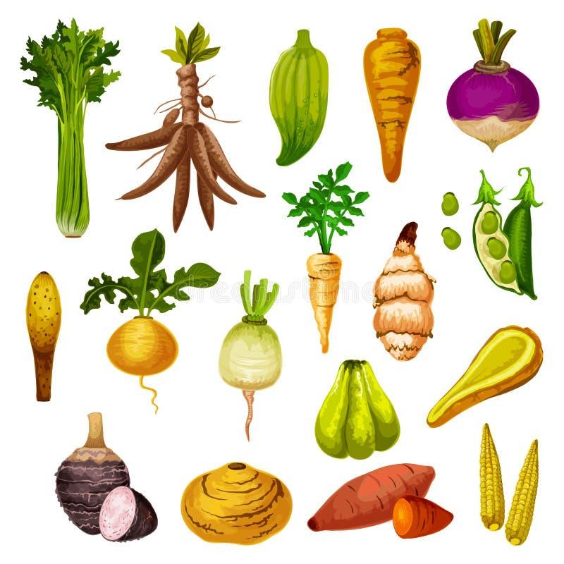 Exotische wortelgewassen en veggies, vector vector illustratie
