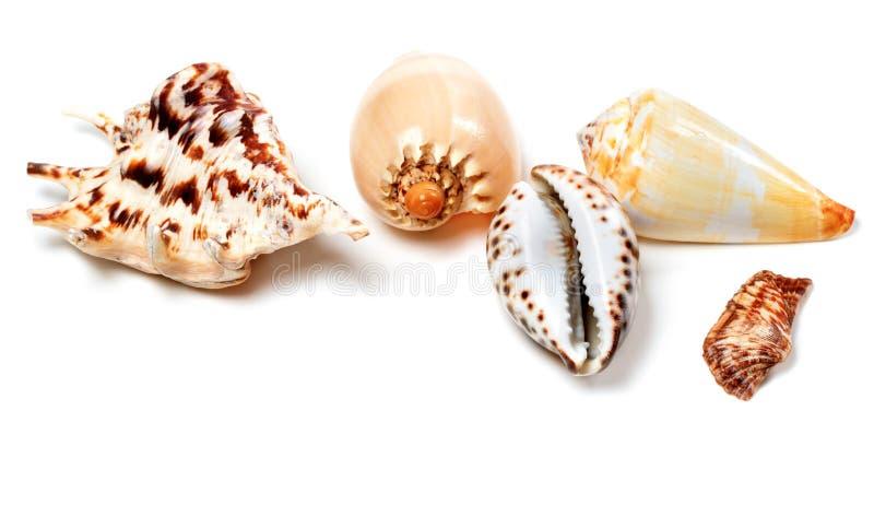 Exotische zeeschelpen op wit stock foto's