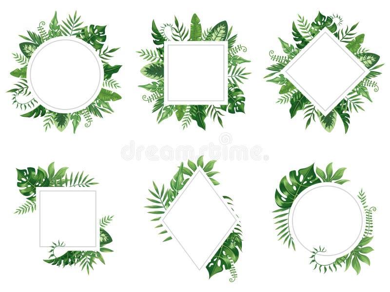 Exotischer Blattrahmen Federblattkarte, tropische Baumrahmen und lokalisierter Vektorsatz des Weinleseblumendschungels Grenze vektor abbildung