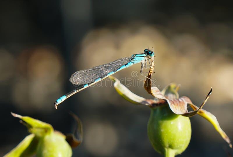 Exotischer Flieger in den Schatten des T?rkises lizenzfreies stockfoto