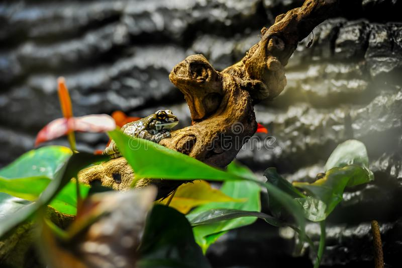 Exotischer Frosch auf Baumast mit grünen Blättern und Blumen lizenzfreie stockbilder