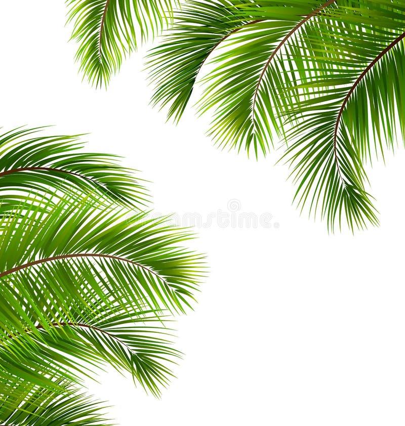 Exotischer Rahmen mit Palmblättern Platz für Ihren Text stock abbildung