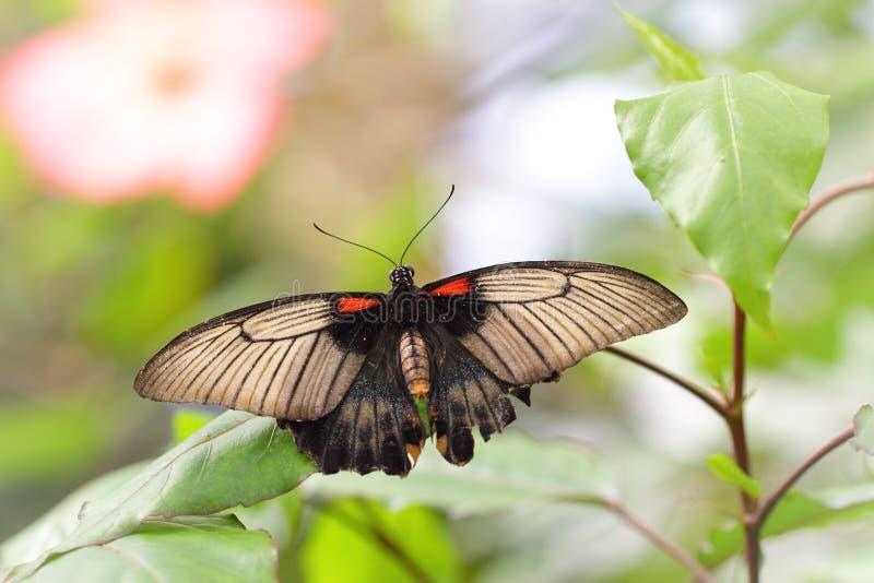 Exotischer Schmetterling in einem grünen Dschungel lizenzfreie stockfotografie