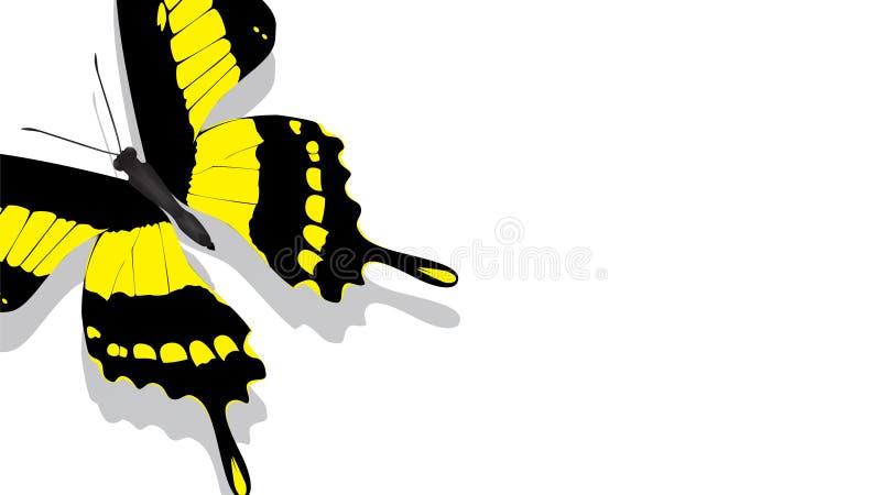 Exotischer Schmetterling mit gelbem Muster auf einem weißen Hintergrund stock abbildung